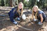 Forest Health tree planting